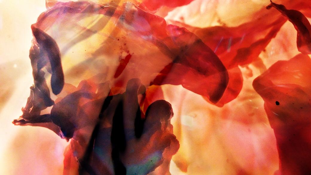 butterfly-nebula_wp